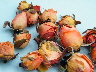 dried rose buds peach
