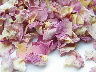 new pale pink rose petals